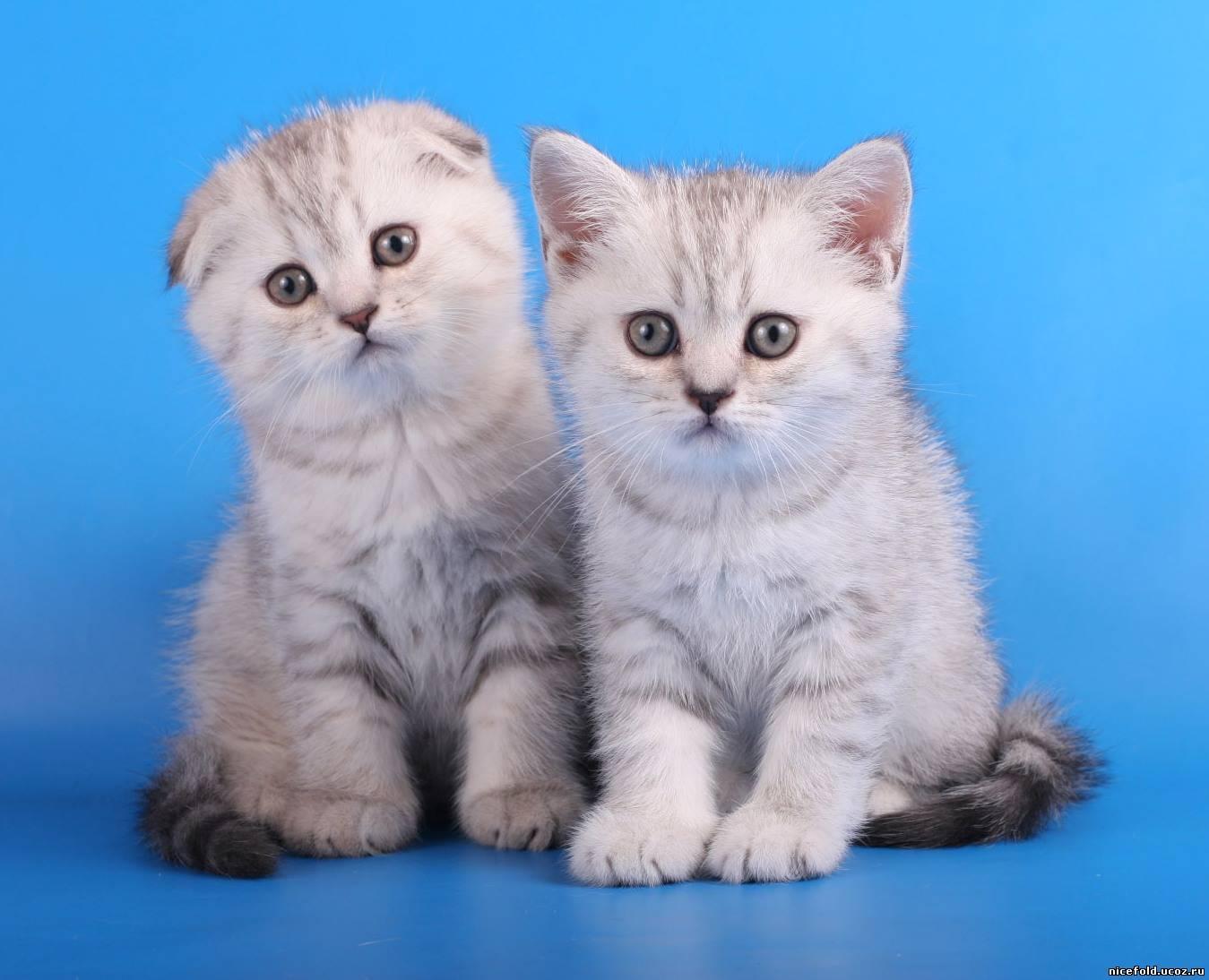 Что такое коты страйт и фолд